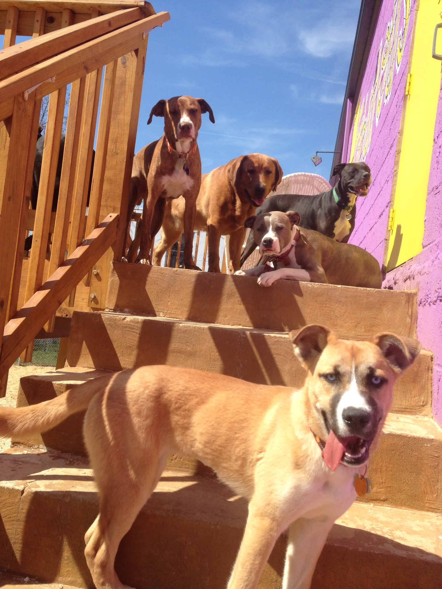 Dog Daycare in Baltimore, MD