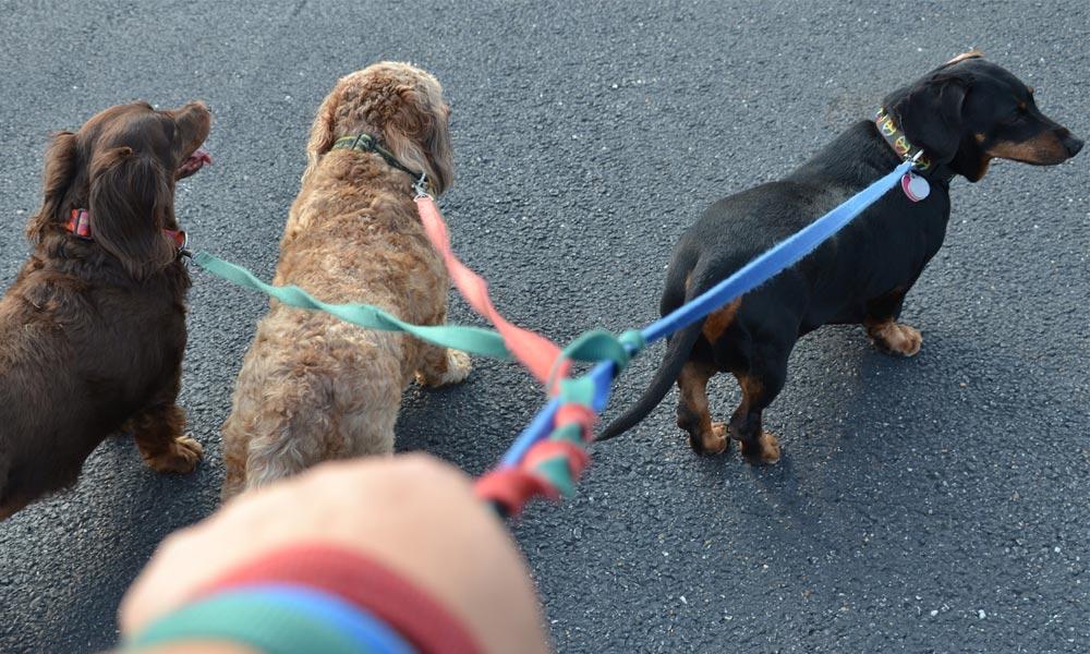 Service Dog Training Baltimore