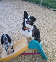 Call us to join in on the fun here at Barks and Blooms Doggie Daycare