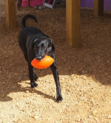 A favorite doggie daycare activity!