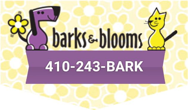 Baltimore Dog Walking, Daycare, Grooming & Cat Care